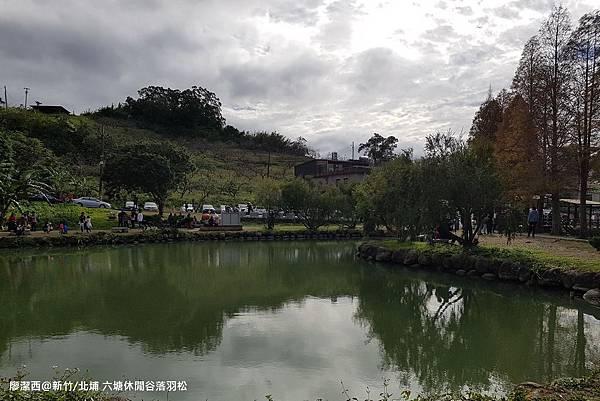 【新竹/北埔】六塘休閒谷落羽松