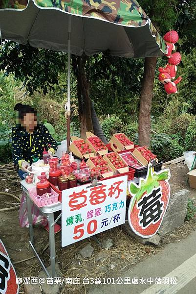 【苗栗/南庄】蘇維拉莊園餐廳附屬落羽松景點