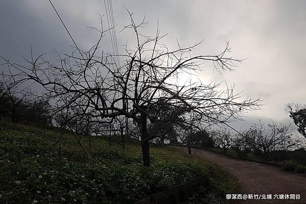 【新竹/北埔】六塘休閒谷