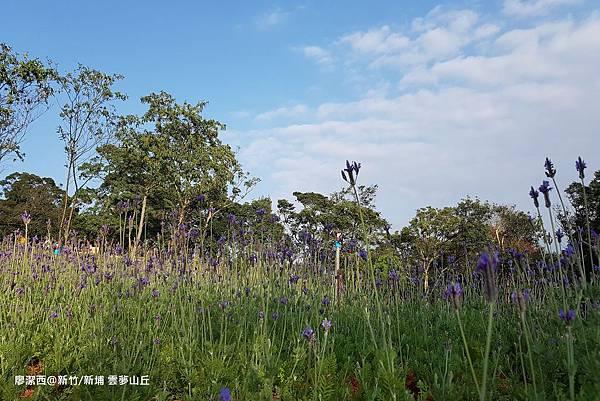 【新竹/新埔】雲夢山丘