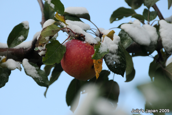 DAY3。青森採蘋果