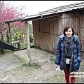 五峰山區沿路櫻花開13.JPG