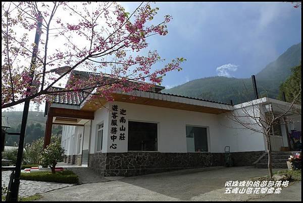五峰山區沿路櫻花開35.JPG