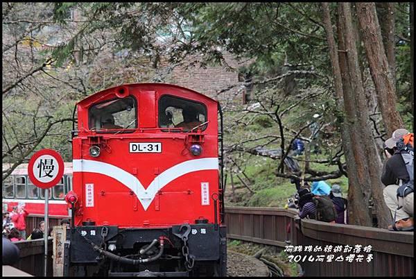 阿里山櫻花季12.JPG