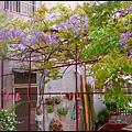 紫藤花開8.JPG