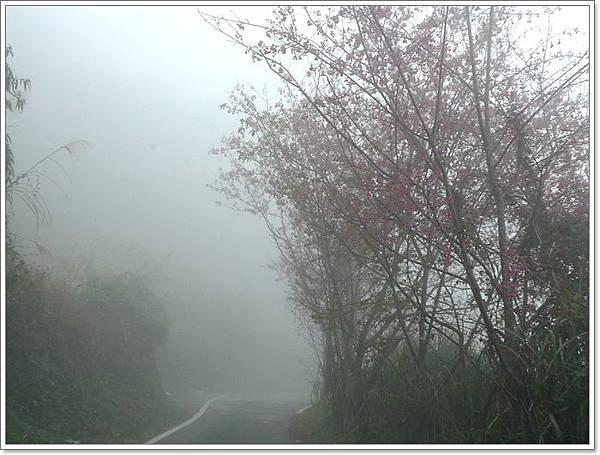 雪霧鬧21.JPG