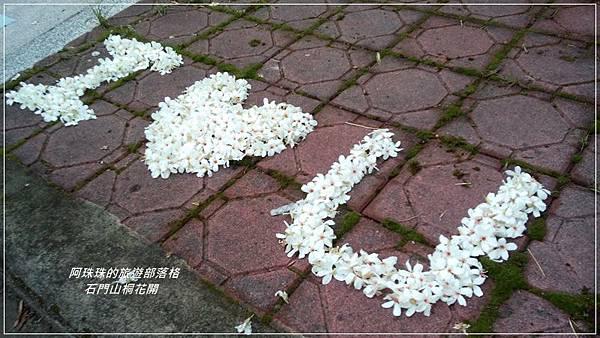 石門水庫桐花開22.jpg