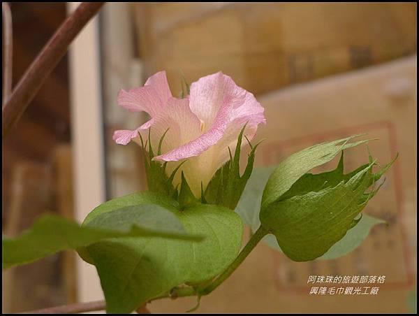 興隆毛巾觀光工廠10.JPG