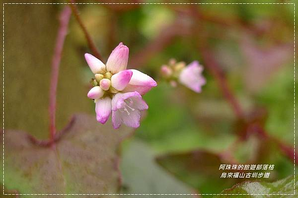 烏來福山古圳步道23.JPG