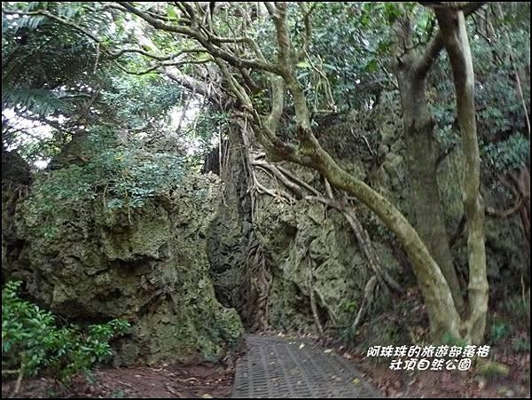 社頂自然公園12.JPG