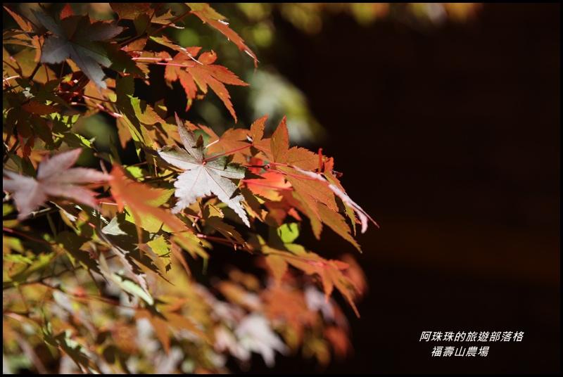 福壽山農場3.JPG