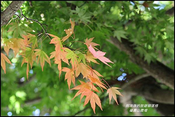 福壽山農場7.JPG
