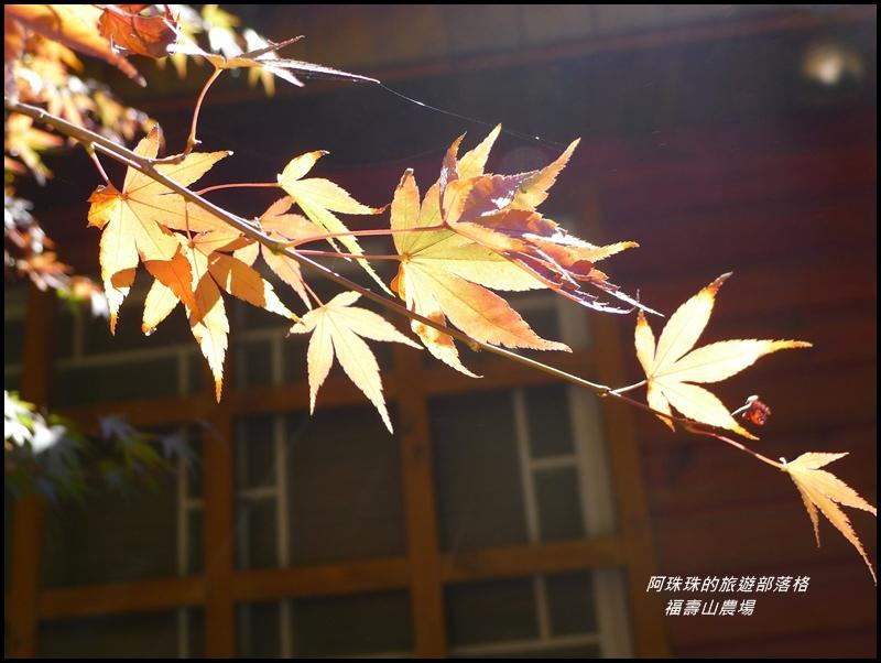 福壽山農場18.JPG