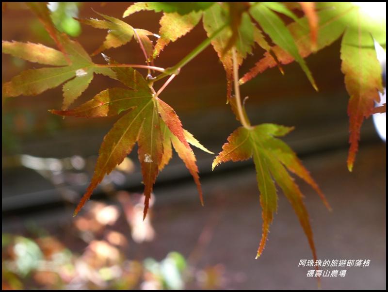 福壽山農場19.JPG