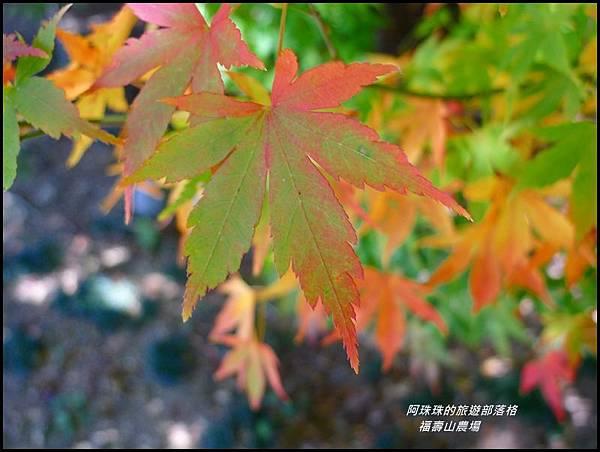 福壽山農場20.JPG