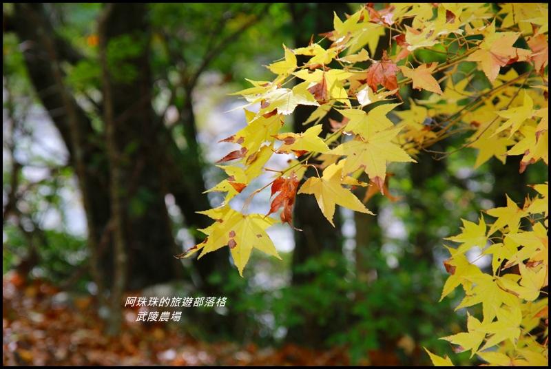武陵農場9.JPG
