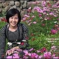 楓樹村花海6.JPG