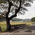 楓樹村花海12.JPG