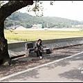 楓樹村花海13.JPG