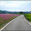 楓樹村花海14.JPG