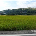 楓樹村花海24.JPG