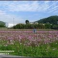 楓樹村花海25.JPG