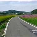 楓樹村花海29.JPG