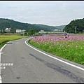 楓樹村花海28.JPG