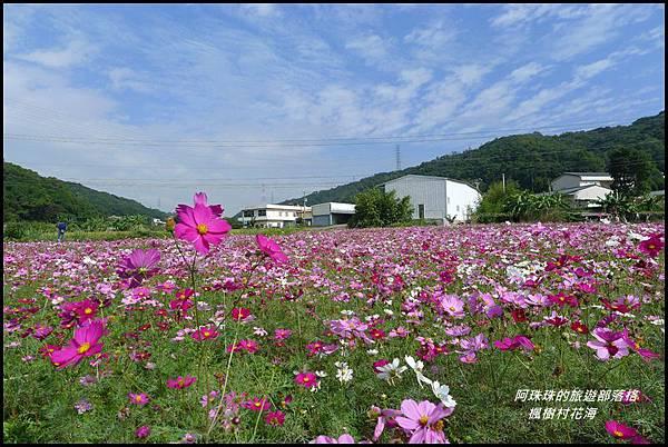 楓樹村花海33.JPG