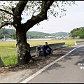 楓樹村花海36.JPG