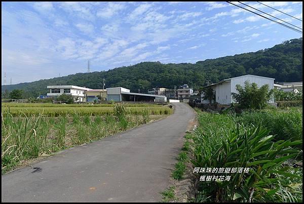 楓樹村花海34.JPG