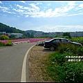 楓樹村花海37.JPG