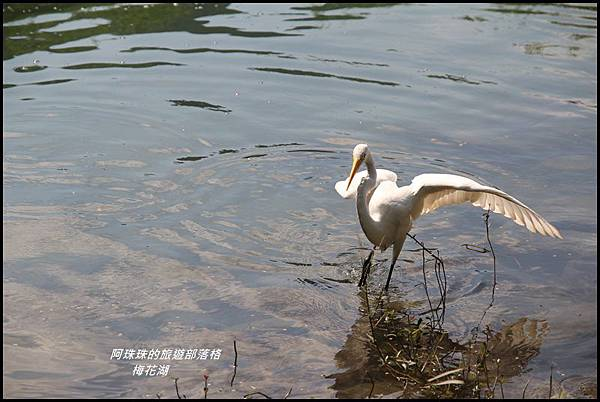 梅花湖12.JPG