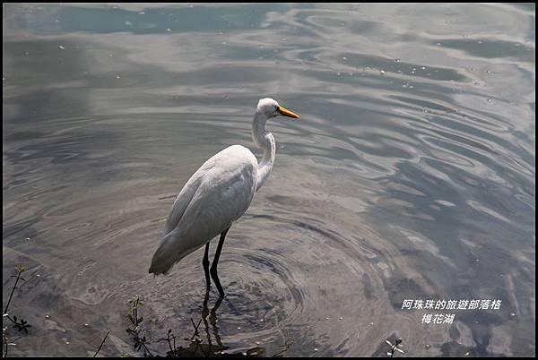 梅花湖13.JPG
