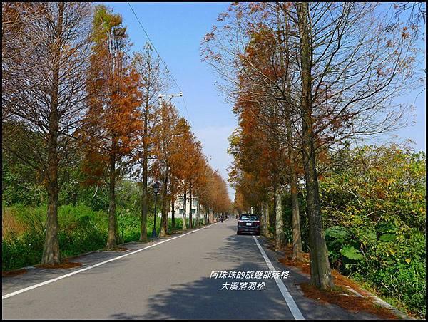 大溪落羽松14.JPG