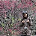 八仙山森林遊樂區6.JPG