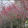 八仙山森林遊樂區15.JPG