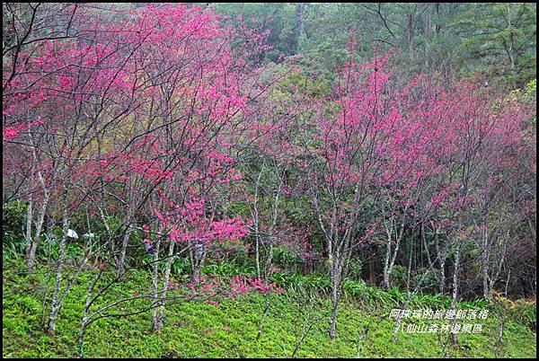 八仙山森林遊樂區19.JPG
