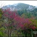 八仙山森林遊樂區22.JPG