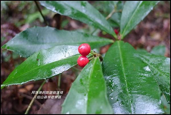 八仙山森林遊樂區34.JPG