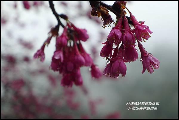 八仙山森林遊樂區44.JPG