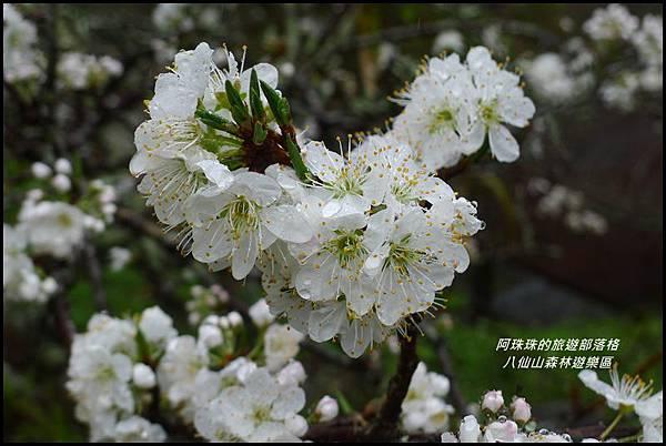 八仙山森林遊樂區46.JPG