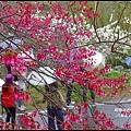 八仙山森林遊樂區45.JPG