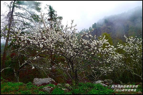 八仙山森林遊樂區49.JPG