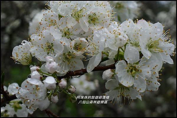八仙山森林遊樂區48.JPG