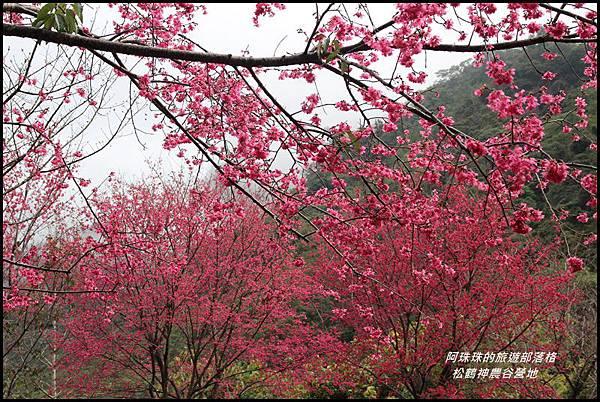 松鶴神農谷營地2.JPG
