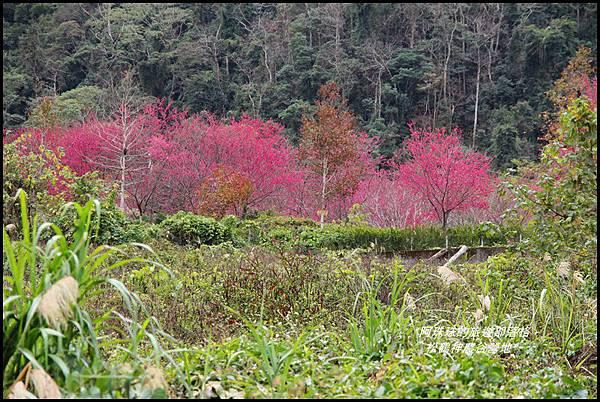 松鶴神農谷營地17.JPG