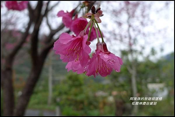 松鶴神農谷營地34.JPG