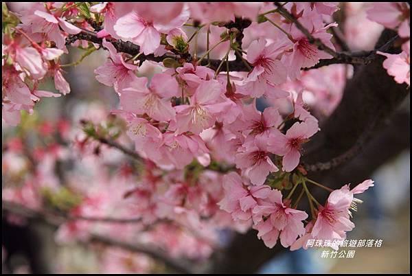 新竹公園3.JPG