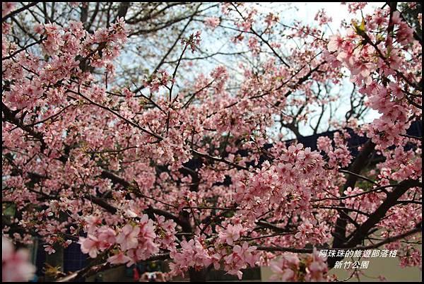 新竹公園12.JPG